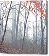 Misty Woodland Showing The Last Fall Color Canvas Print