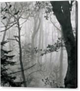 Misty Woods, Juniper Canvas Print