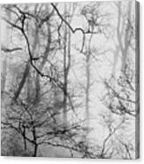 Misty Woods, Whitley Mill Canvas Print