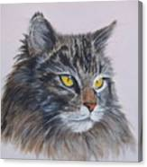 Mitze Maine Coon Cat Canvas Print
