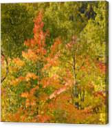 Mixed Autumn Canvas Print