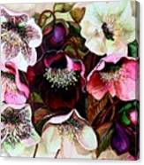 Mixed Hellebore Canvas Print
