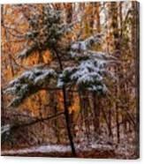 Mixed Seasons Canvas Print