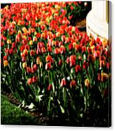 Mixed Tulips Canvas Print