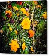 Mixture Of Flowers On Summer Day Canvas Print