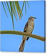 Mockingbird In A Palm Tree Canvas Print