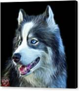 Modern Siberian Husky Dog Art - 6024 - Bb Canvas Print