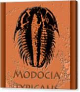 Modocia Typicalis Fossil Trilobite Canvas Print