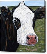 Mohawk Cow Canvas Print