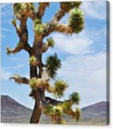 Mojave Joshua Tree Canvas Print