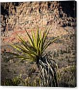 Mojave Yucca Canvas Print