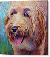 Mojo The Shaggy Dog Canvas Print