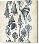 Mollusks - 1842 - 17 Canvas Print