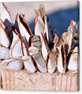 Mollusks On Wood Plank Canvas Print