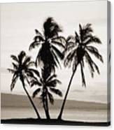 Molokai Palms Canvas Print