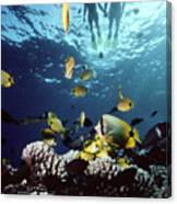 Molokini Snorkeling Couple Canvas Print