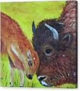 Mom And Baby Buffalo Calf Canvas Print