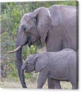 Mom And Baby Elephant Canvas Print
