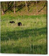 Mom And Cub Canvas Print