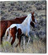 Mom And The Filly Leaving Canvas Print