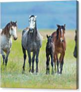 Mom, Dad, And Two Colts Canvas Print