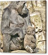 Momma And Baby Gorilla Canvas Print
