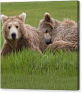 Momma And Cub Canvas Print