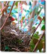 Momma Cardinal Nesting Canvas Print