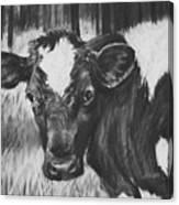 Momma Cow Canvas Print