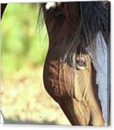 Momma Horse  Canvas Print