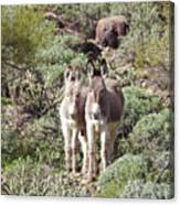 Mommy And Baby Burro Canvas Print