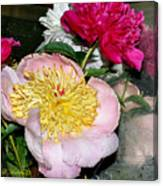 Mom's Peonies Canvas Print