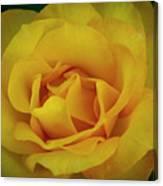 Moms Yellow Rose Canvas Print