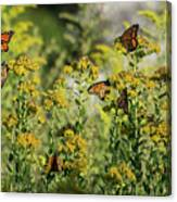 Monarch 6 Canvas Print