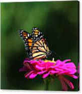 Monarch 7 Canvas Print