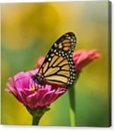 Monarch 9 Canvas Print