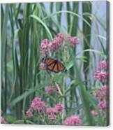Monarch And Pink Canvas Print