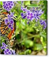 Monarch And Purple Flowers Canvas Print