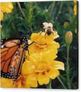 #002 Monarch Bumble Bee Sharing Canvas Print