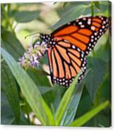 Monarch Butterfly 3 Canvas Print