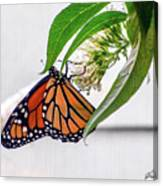 Monarch Butterfly In The Garden 3 Canvas Print