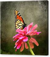 Monarch Butterfly And Pink Zinnia Canvas Print
