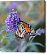 Monarch Butterfly And Purple Flowers Canvas Print