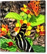 Monarch Butterfly And Zebra Butterfly Canvas Print