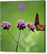 Monarch Butterfly Balanced 2017 Canvas Print
