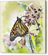 Monarch Butterfly Blank Note Card Canvas Print