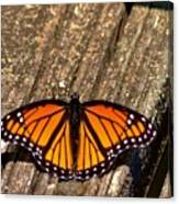 Monarch Butterfly II Canvas Print