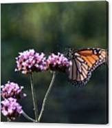 Monarch Butterfly IIi Canvas Print