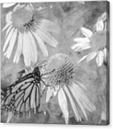 Monarch Butterfly In Black And White Canvas Print