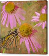 Monarch Butterfly In Pink Canvas Print